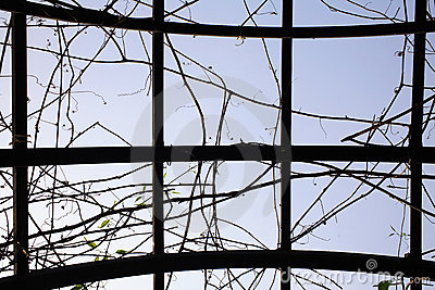Vines and sky