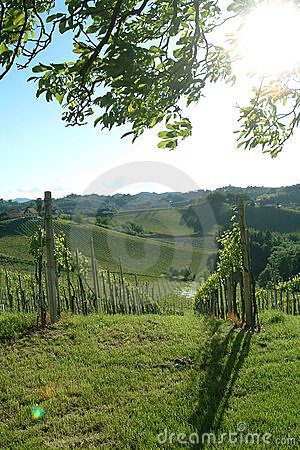 Free Vineyard Royalty Free Stock Photo - 1515565