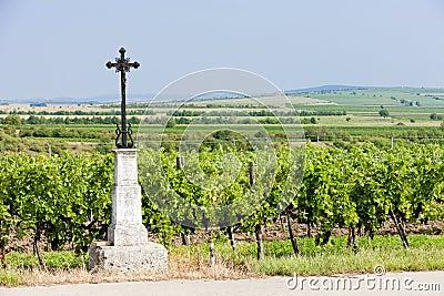 Vineyard, Austria