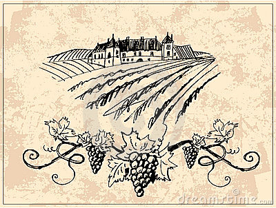 Vineyard and castle