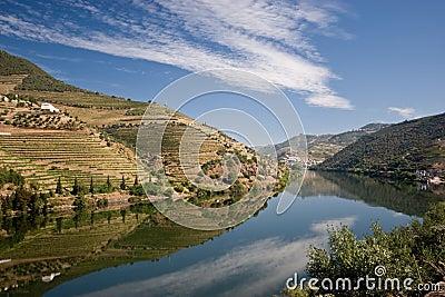 Vineyard on Douro river