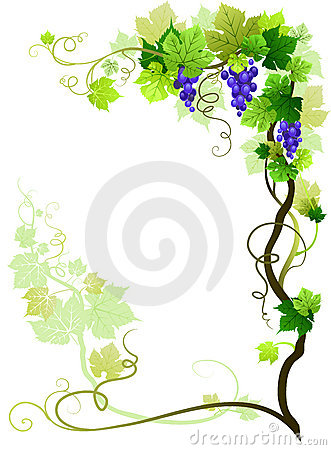 Vineyard frame