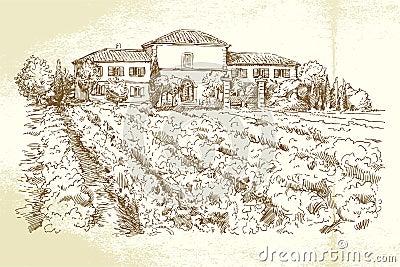Vineyard France