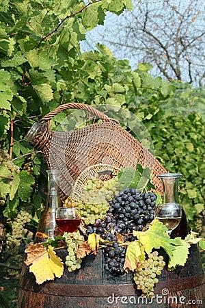 Vineyard grape and wine