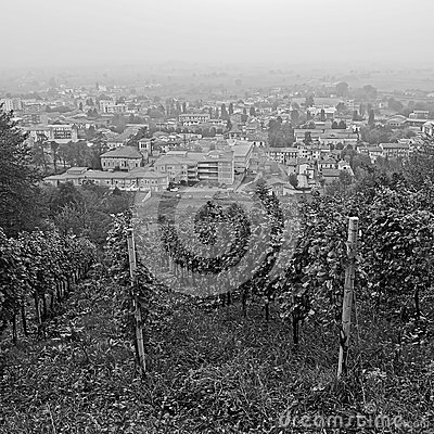 Vineyard in the pollution