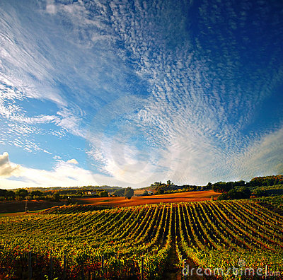 Free Vineyard In Italy Royalty Free Stock Images - 3849069