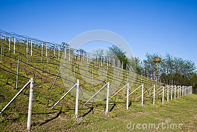 Vineyard irrigation system