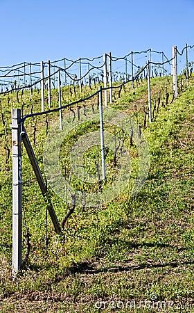Free Vineyard Irrigation System Stock Photos - 19338533