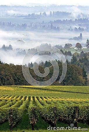 Free Vineyard Landscape Royalty Free Stock Photography - 2020867