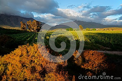 Vineyard Landscape Royalty Free Stock Photos - Image: 28869978
