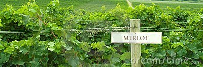 Vineyard Merlot Sign