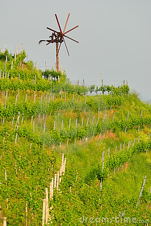 Vineyard no.2