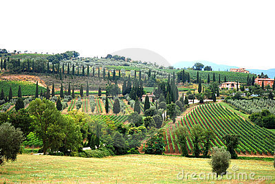 Vineyard and olive grove