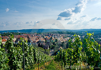 Vineyard and residential district in Stuttgart.