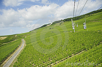 Vineyard in rhine valley,germany,europe.