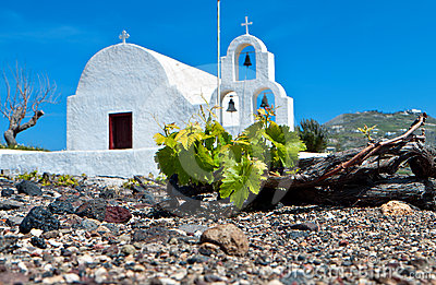 Vineyard at Santorini of Cyclades, Greece