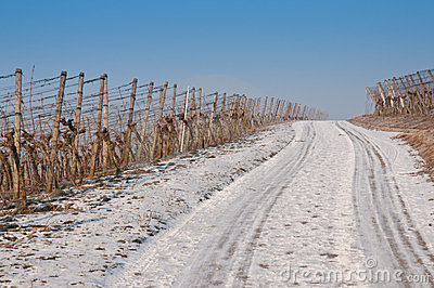Vineyard with snow in winter