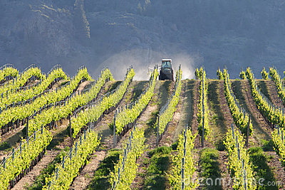 Vineyard Tractor, Okanagan, BC.