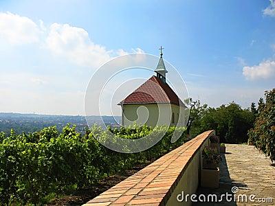 Vineyard in Troy (Troja) in Prague