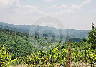 Vineyard in valley
