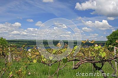 Vineyard, Wine Making