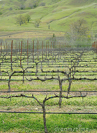 Vineyard, Wine Making Business