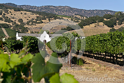 Vineyard and winery in the Napa Valley