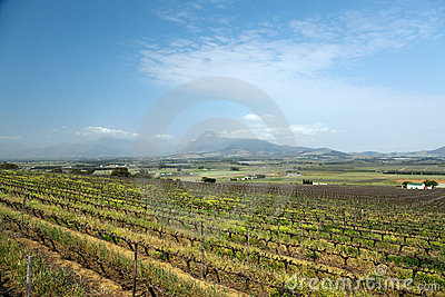 Vineyard or winery in South Africa