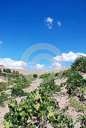 Free Vineyards Stock Photography - 26349952