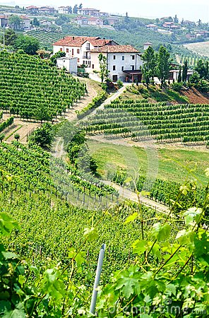 Free Vineyards And Wineries In Piemont Stock Photos - 52198033