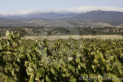 Vineyards of Castile-La Mancha