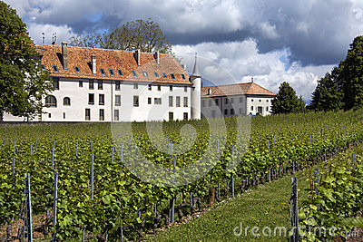 Vineyards - Chateau Allaman - Switzerland Editorial Image