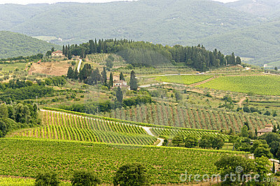 VIneyards Of Chianti (Tuscany) Stock Photos - Image: 22076773