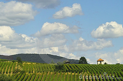 Vineyards and clouds