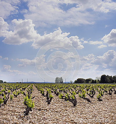 Vineyards, Cotes du Rhone Wine Country, France