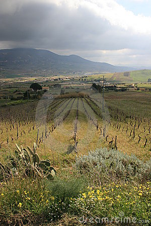 Vineyards cultivation & mount 22