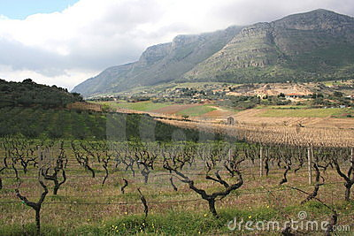 Vineyards cultivation & Mount. Sicily