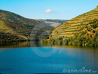 Vineyards by douro river porto wine