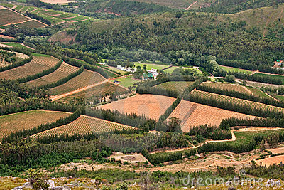Vineyards in fertile valley