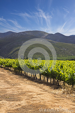 Vineyards with hills and cloudy blue sky