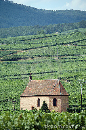Free Vineyards In Alsace, France Stock Images - 1134064