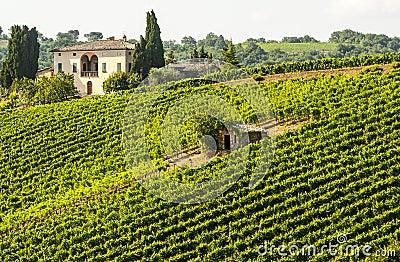 Vineyards of Montalcino (Tuscany)