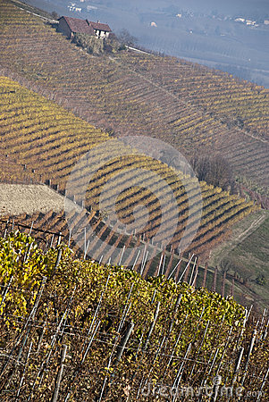 Vineyards near Barolo, Piemonte Italy