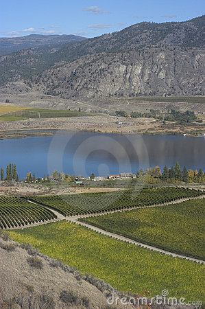 Vineyards of Okanagan
