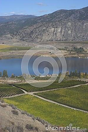 Vineyards of Okanagan