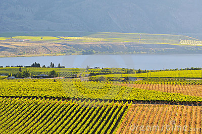 Vineyards and Orchards in Osoyoos