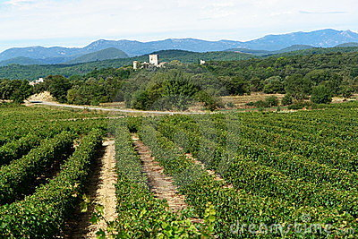 Vineyards in southern France