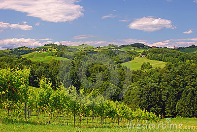 Vineyards in Styria,Austria