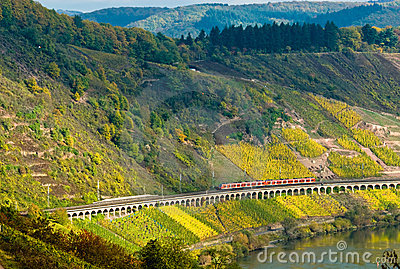 Vineyards, train and forest