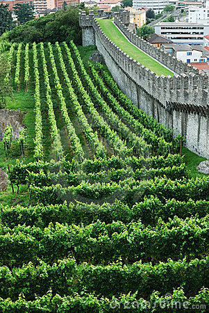 Vineyards under the rampart in Bellinzona.